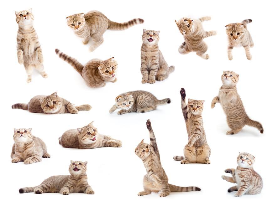 30.01.2016 תערוכת חתולים ומופע